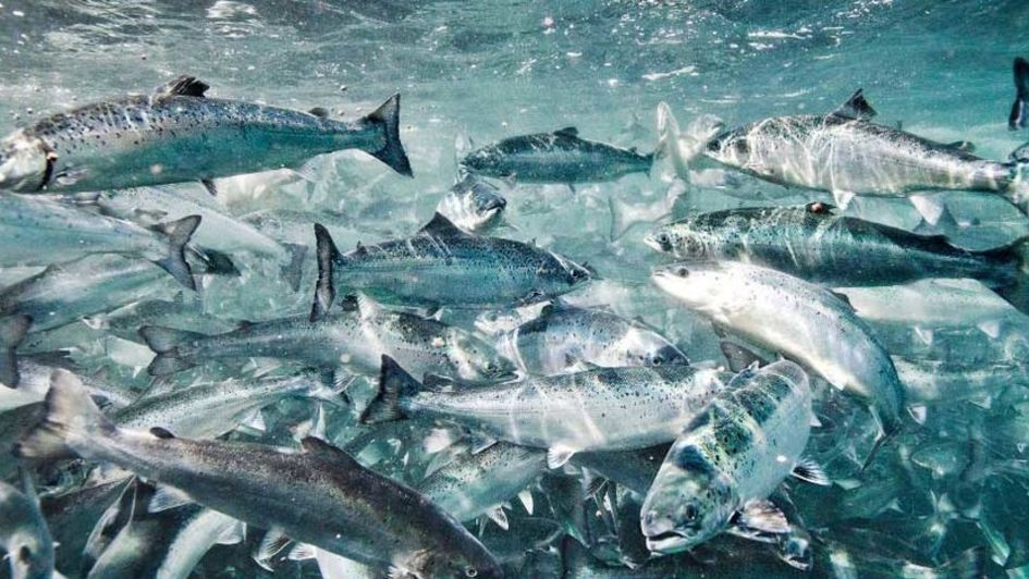 贏創與帝斯曼合作,通過全球獨有的天然海藻發酵技術,生產天然海藻源 Ω-3 脂肪酸